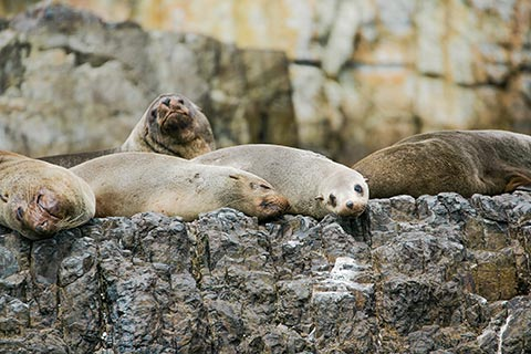 Photograph of seals basking on rocks